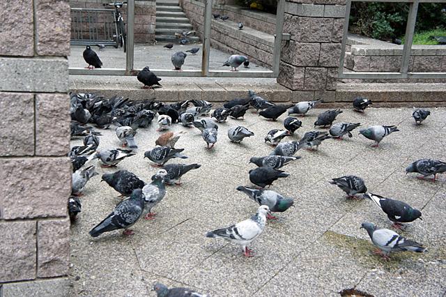 アッパーイーストサイドの鳩